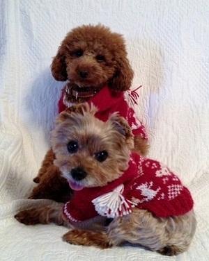 クリスマスセーター2
