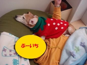 11_01_30_03.jpg