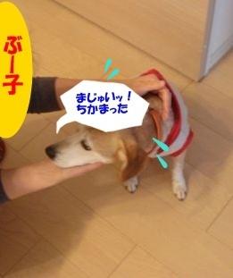 11_02_11_03.jpg