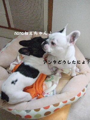 晴nana