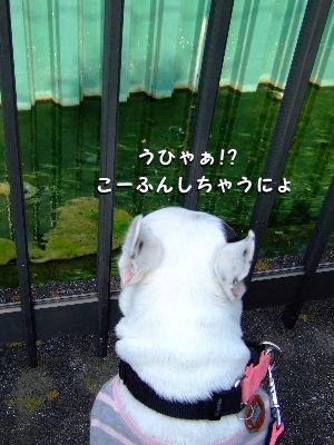 2010_0328近場de花見0004