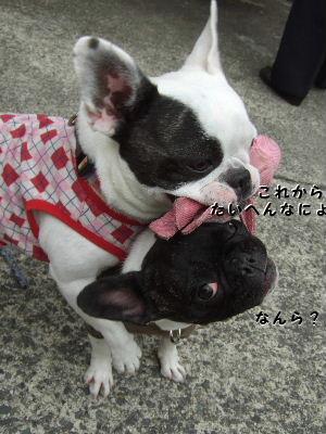 晴nana1