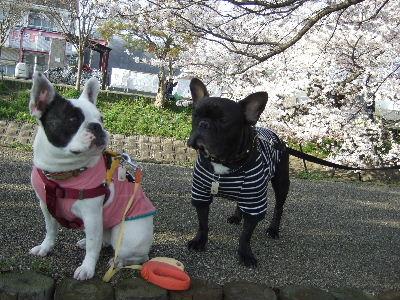 亀吉君&nana