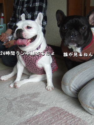 亀ちゃん&nana