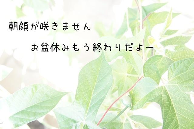 20120815.jpg
