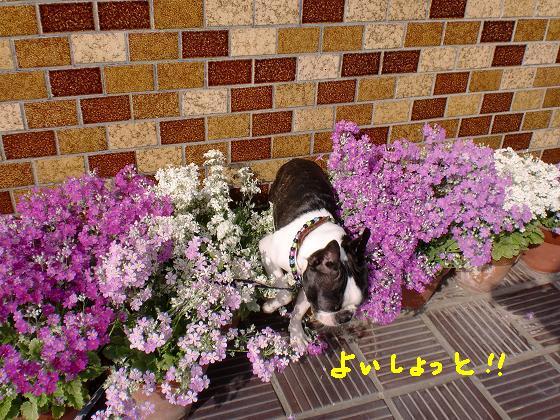 20100316CIMG0814.jpg