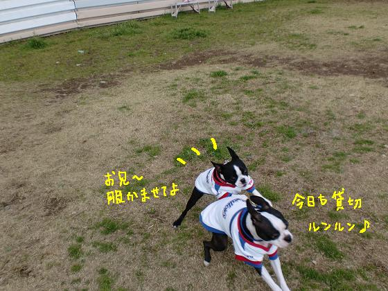20100321CIMG0938.jpg