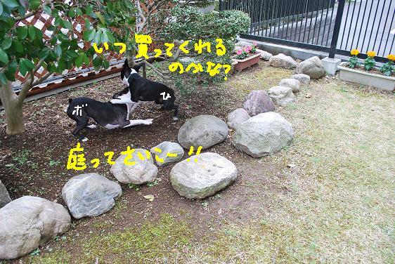 20100330DSC_6027.jpg