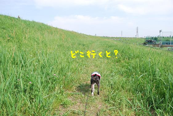 20100511DSC_1009.jpg