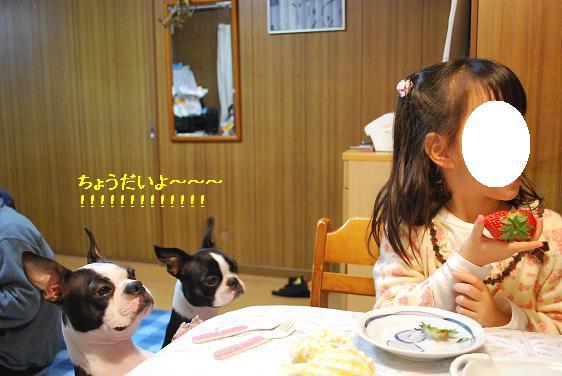 20110105DSC_6668.jpg