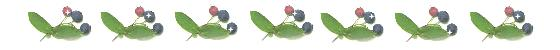 blueberry-line-2.jpg