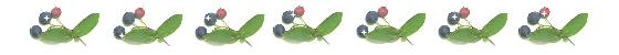 blueberry-line.jpg