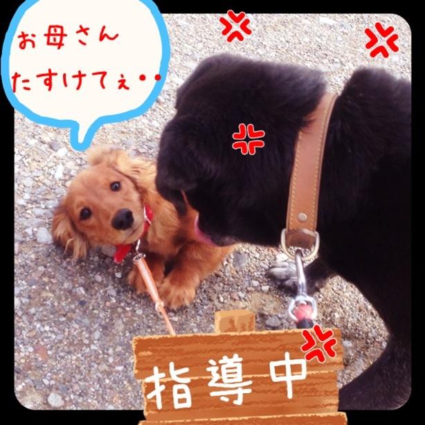 image_20130207175842.jpg
