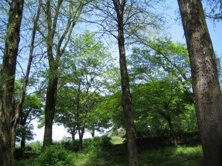 ゴールデンウイークの鶴来の樹木公園