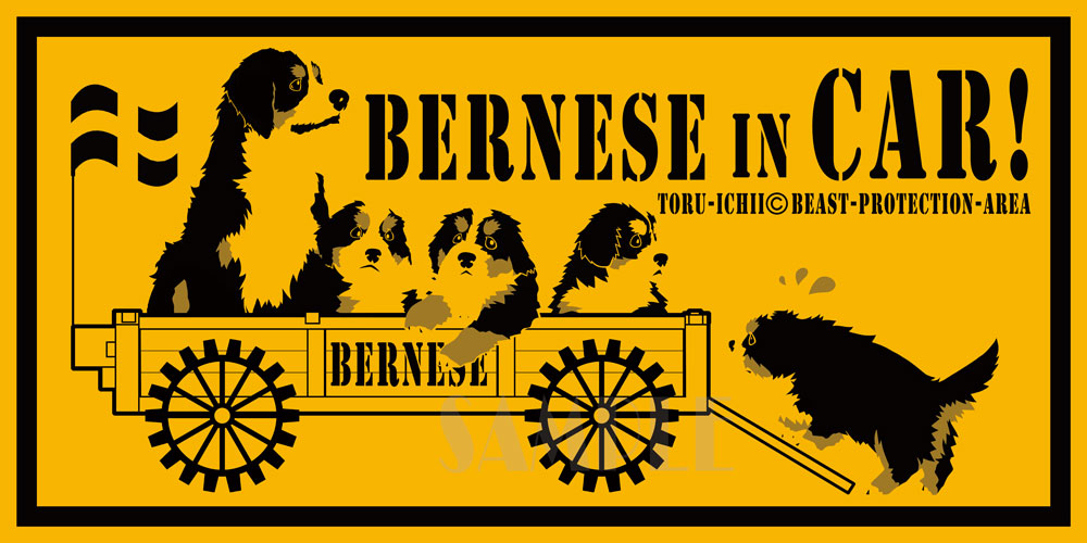 bernese-in-car.jpg
