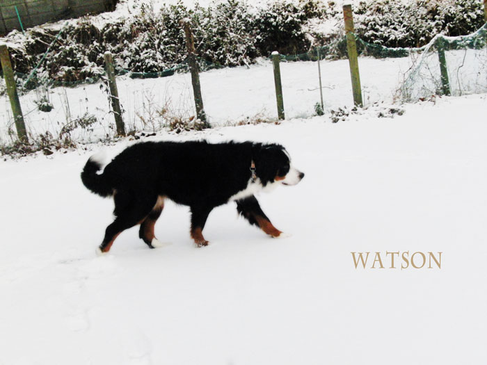 watson-065.jpg
