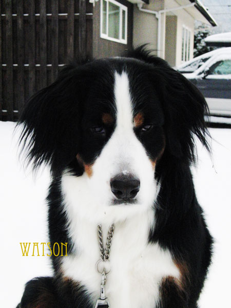 watson-068.jpg
