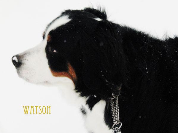 watson-079.jpg