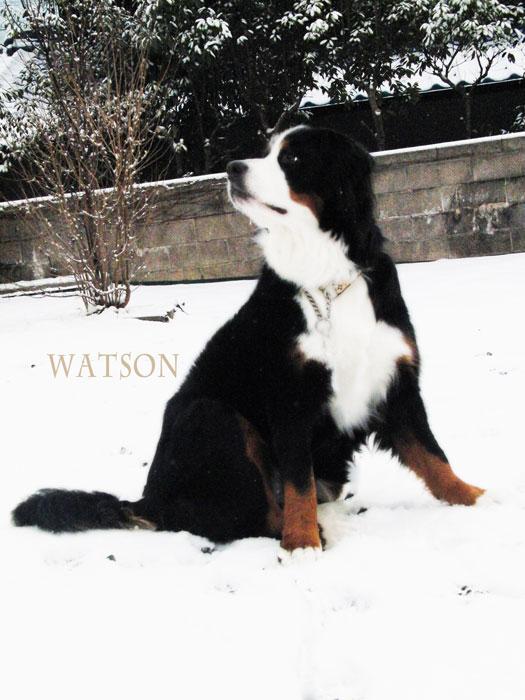 watson-095.jpg