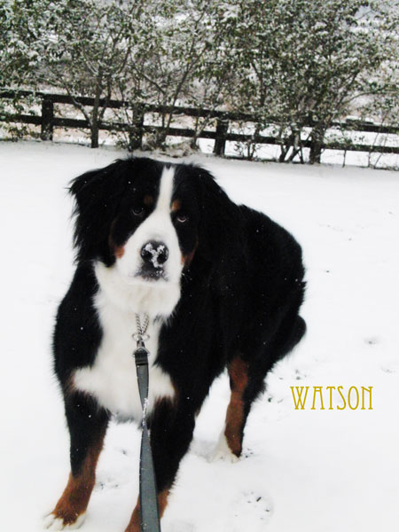 watson-129.jpg
