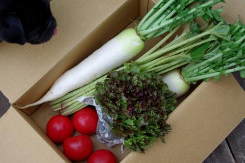 110526お野菜
