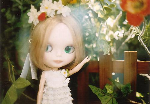 inca rose