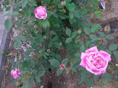 2012_0509_064429-CIMG3138.jpg