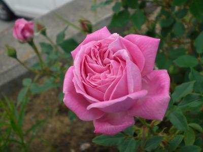 2012_0509_064509-CIMG3141.jpg