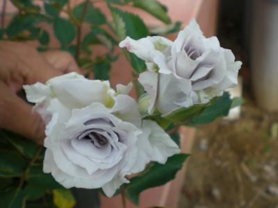 2012_0512_073242-CIMG3160.jpg