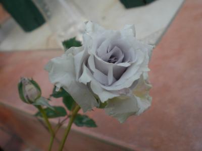 2012_0512_073259-CIMG3161.jpg