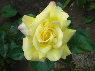 2012_0514_144408-CIMG3199.jpg