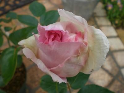 2012_0516_075306-CIMG3241.jpg