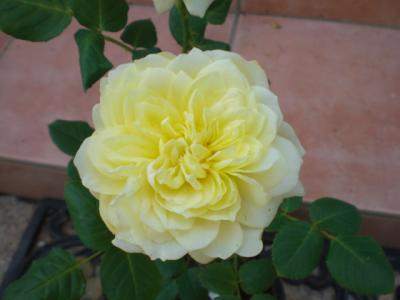 2012_0516_120406-CIMG3251.jpg