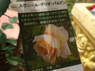 2012_0517_090100-CIMG3292.jpg
