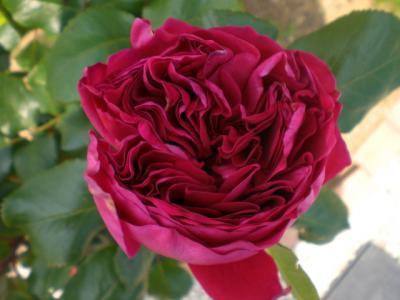 2012_0517_114805-CIMG3313.jpg