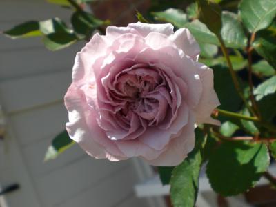 2012_0519_114034-CIMG3368.jpg