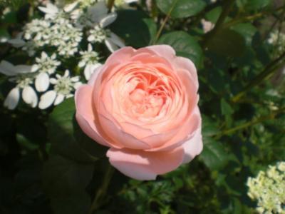2012_0520_104505-CIMG3413.jpg