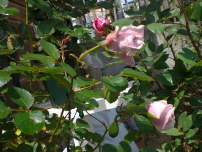 2012_0520_104553-CIMG3418.jpg