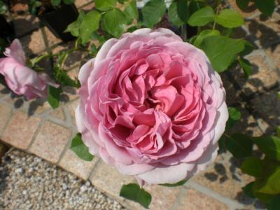 2012_0520_104757-CIMG3424.jpg