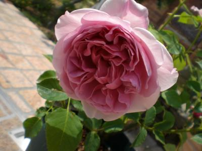 2012_0520_104849-CIMG3427.jpg