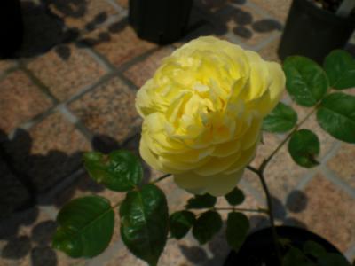 2012_0520_104921-CIMG3429.jpg