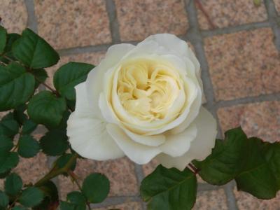 2012_0520_160513-CIMG3491.jpg