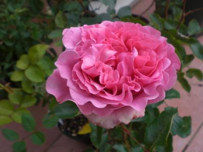2012_0521_082507-CIMG3506.jpg
