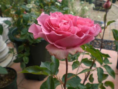 2012_0521_082536-CIMG3508.jpg