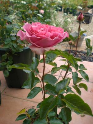 2012_0521_082542-CIMG3509.jpg