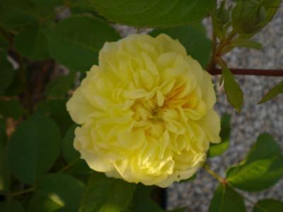 2012_0521_164054-CIMG3560.jpg
