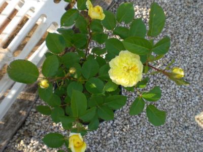 2012_0521_164113-CIMG3561.jpg