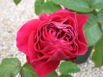 2012_0523_101100-CIMG3580.jpg