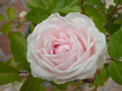 2012_0523_101846-CIMG3598.jpg