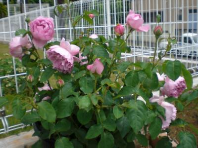2012_0523_102342-CIMG3610.jpg